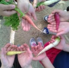 TMA_carrots_Garden