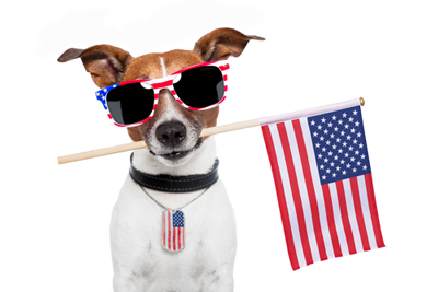 fourth-dog-sunglasses