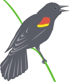blackbird-logo