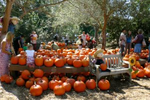 ENC_pumpkinpatch