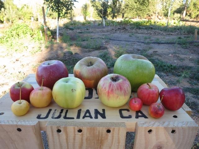 Julian_apples