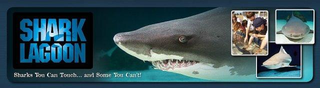 sharklagoon1